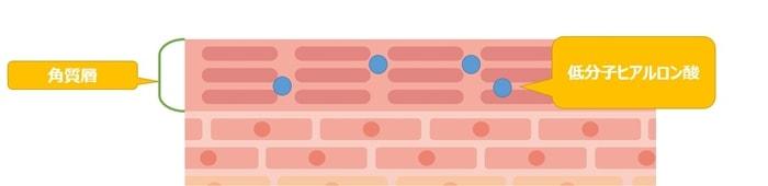 低分子ヒアルロン酸の浸透模式図